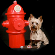 Dog in Red Coat by Fire Hydrant, Investigation Services in Westwego, LA